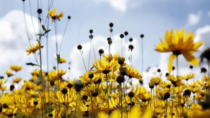 beauté-en-fleurs-images-paysage-fleuri-photo-emouvante-nature