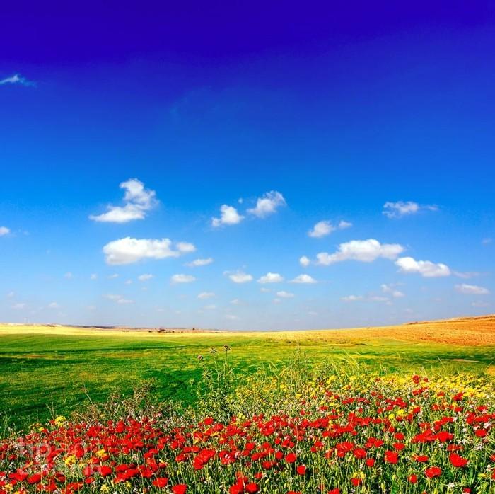 le plus beau paysage fleuri voyez les meilleures images With couleurs froides et chaudes 5 le plus beau paysage fleuri voyez les meilleures images