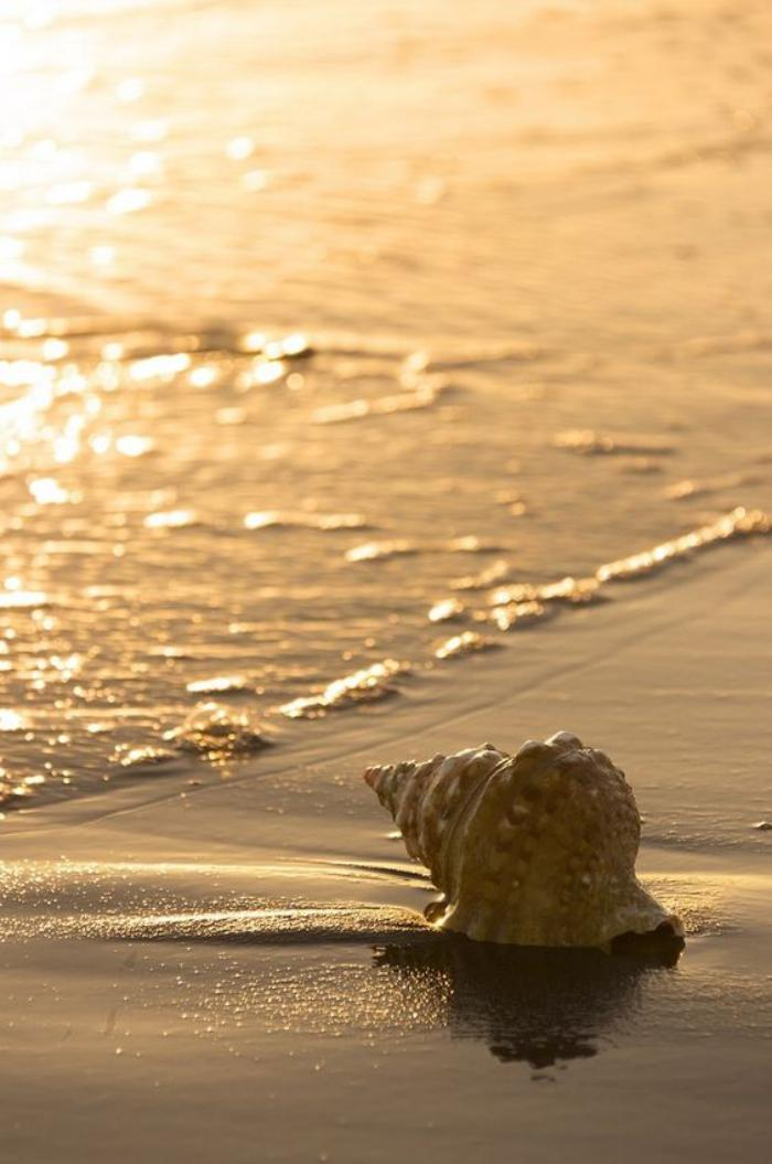 bord-de-la-mer-les-eaux-limpides-d'une-plage