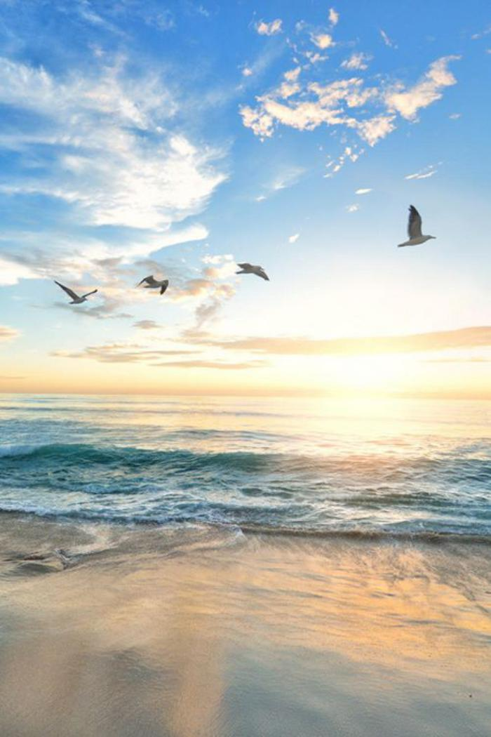 bord-de-la-mer-oiseaux-qui-volent-au-dessus-de-la-plage