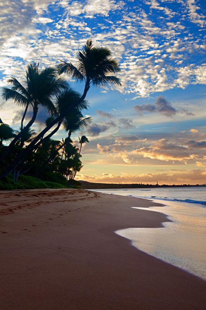 bord-de-la-mer-palmiers-au-bord-de-la-mer