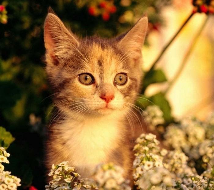 chat-mignon-chat-trop-mignon-petit-chat-mignon