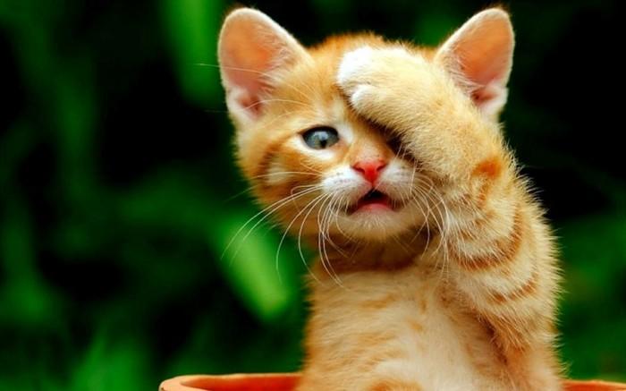 meilleur photo du chat mignon c 39 est a vous de d cider. Black Bedroom Furniture Sets. Home Design Ideas