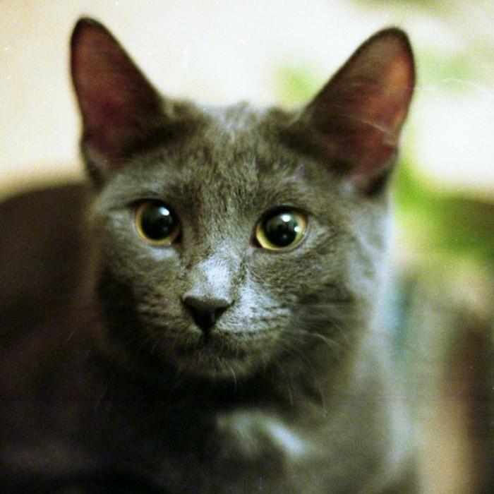 chaton-mignon-chat-trop-mignon-petit-chat-mignon-coloriage-de-chat