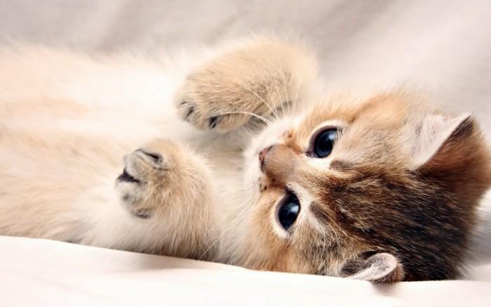 Turbo Meilleur photo du chat mignon ? C'est a vous de décider! - Archzine.fr BK54
