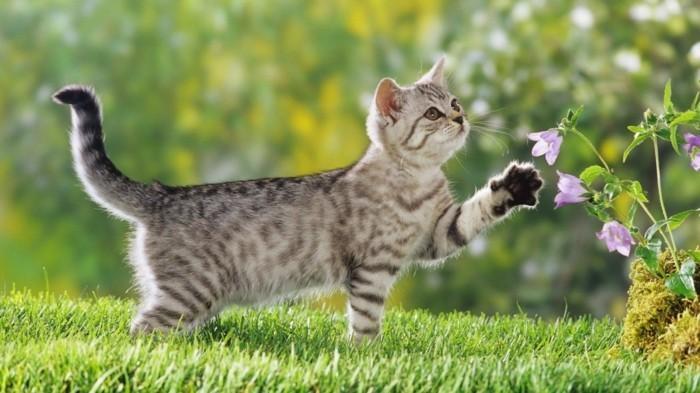 chaton-trop-mignon-coloriage-chaton-petit-chat-mignon-bébé-chat