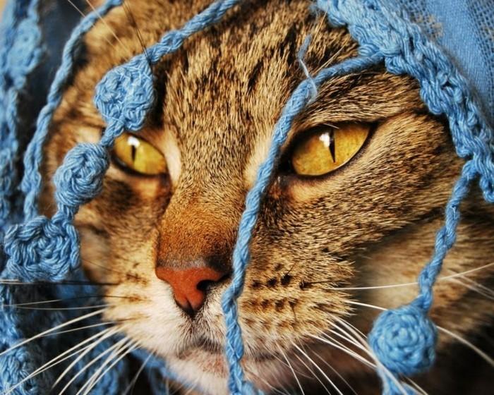 chaton-trop-mignon-image-mignonne-bébé-chat-chaton-mignon