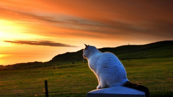 chaton-trop-mignon-petit-chat-mignon-coloriage-chaton-chats-mignons