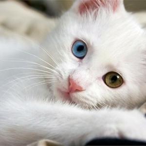 Meilleur photo du chat mignon ? C'est a vous de décider!