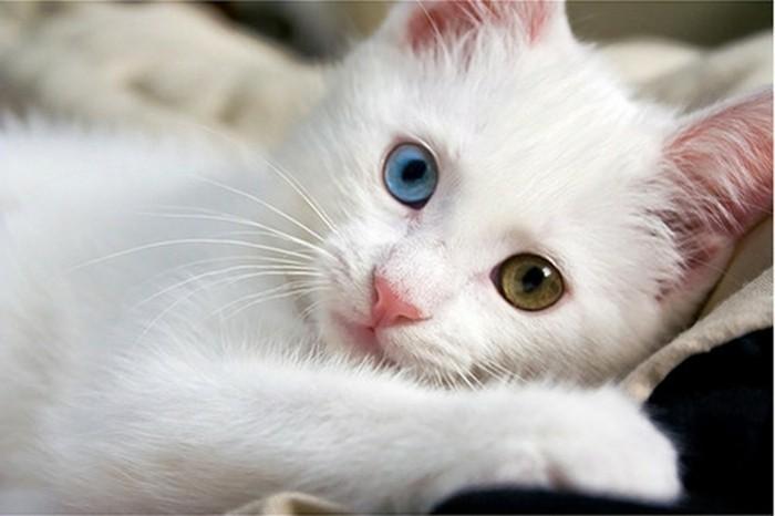 chats-mignons-chaton-mignon-bébé-chat-coloriage-de-chat