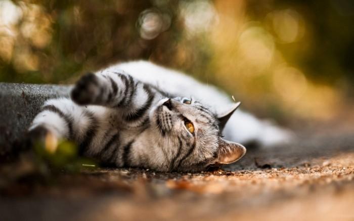 chats-mignons-image-de-chat-torp-mignon-petit-chat-mignon-coloriage-chaton