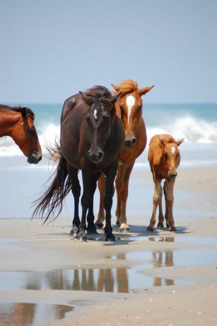 chevals-sur-la-plage-iles-paradisiaques-et-sauvages-destination-de-reve