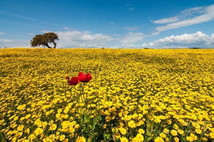 chouette-idée-belles-images-gratuites-photos-de-la-nature-jaune