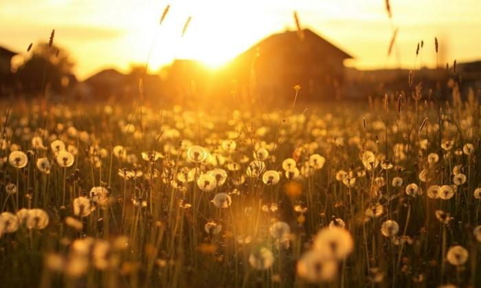 chouette-image-belles-images-paysage-fleuri-photo-emouvante-nature