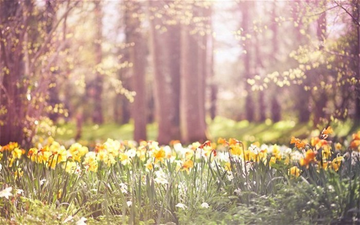 chouette-image-idée-belles-images-gratuites-photos-de-la-nature-montagne