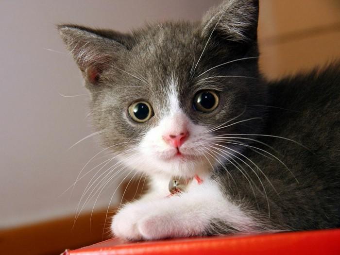 coloriage-chat-bébé-chat-image-de-chat-trop-mignon-petit-chat-mignon