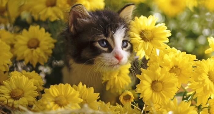 Coloriage Chat Avec Des Fleurs.Meilleur Photo Du Chat Mignon C Est A Vous De Decider Archzine Fr