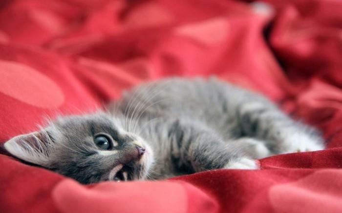 coloriage-de-chat-image-mignonne-petit-chat-mignon-chaton-trop-mignon-coloriage