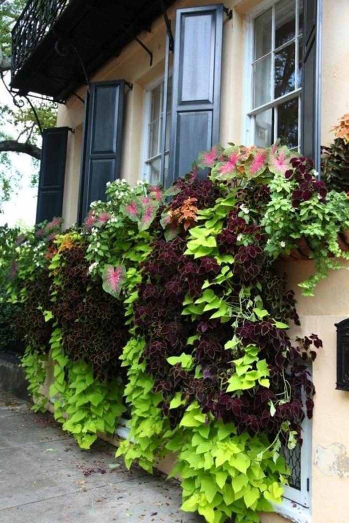 comment-fleurir-son-balcon-avec-des-fleurs-grimpantes-balcon-idee-fleurs