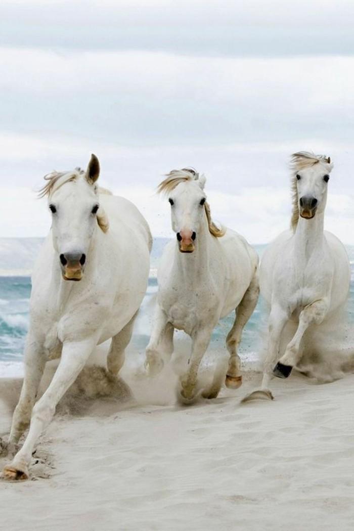 destination-de-reve-les-plages-sauvages-sabla-blanc-les-meilleures-plages-du-monde