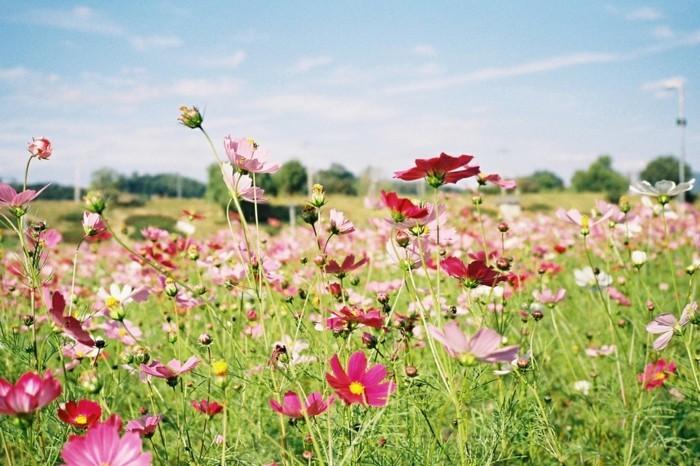 fleurs-peleuse-photo-d-un-paysage-clairière-montagnes-campagne