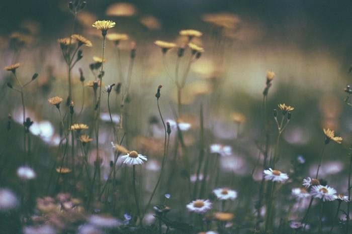 fleurs-peleuse-photo-d-un-paysage-clairière-montagnes