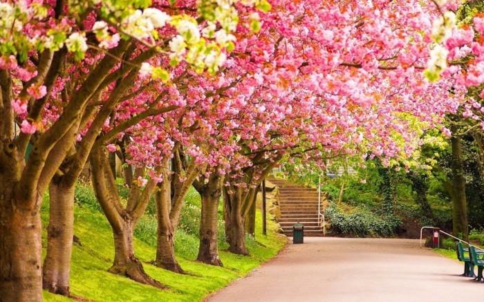 formidable-photographie-artistique-images-trop-belles-beau-jardin