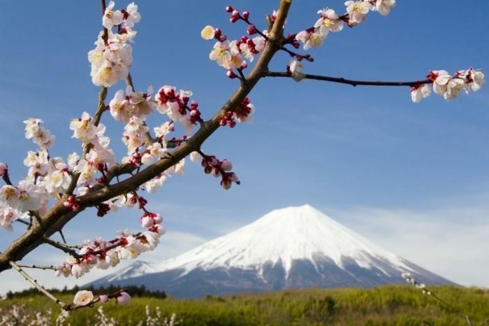 formidable-photographie-artistique-images-trop-belles-japon
