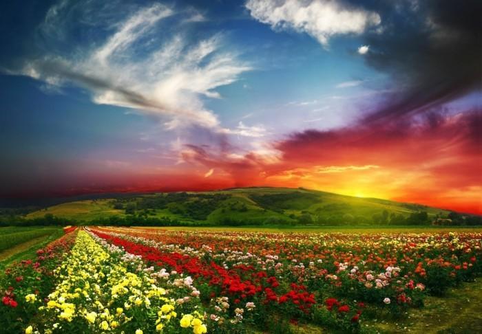 franche-photographie-artistique-images-trop-belles-coucher-de-soleil