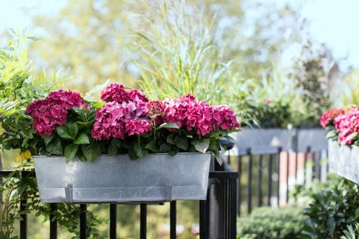 Balcony Gardener