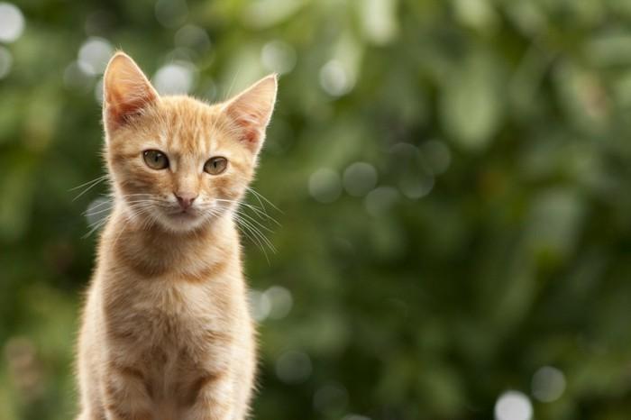 image-mignonne-bébé-chat-coloriage-de-chat-petit-chat-mignon