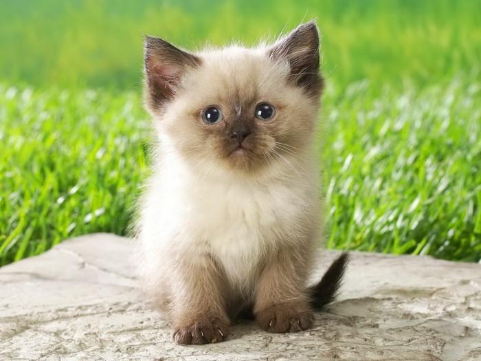 image-mignonne-petit-chat-mignon-chaton-mignon-petit-chat-mignon