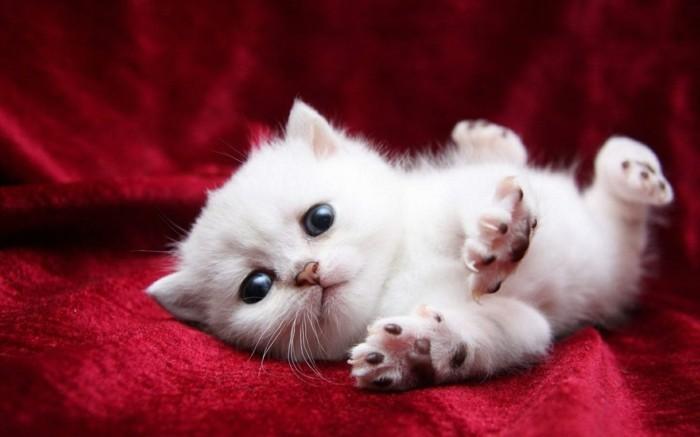 image-mignonne-petit-chat-mignon-coloriage-chaton-chats-mignons