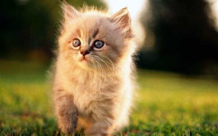 image-mignonne-petit-chat-mignon-coloriage-chaton