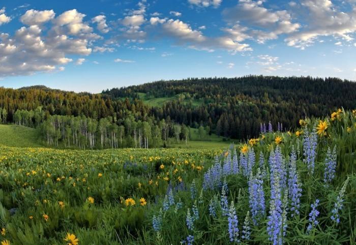 une-belle-photographie-plus-belle-image-du-monde-nature