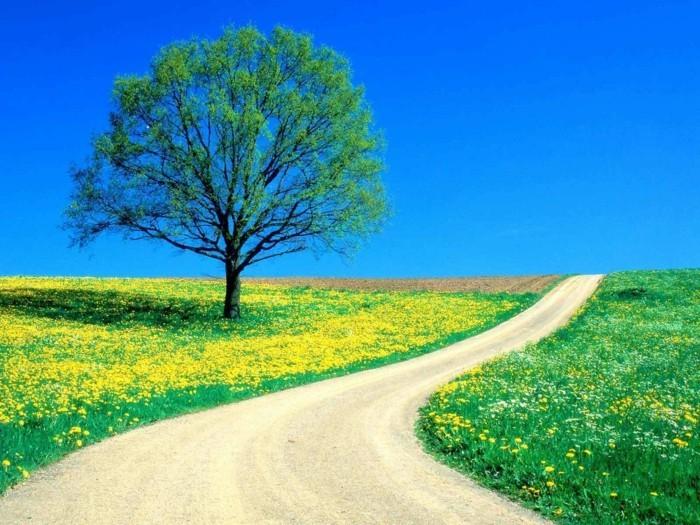 inspiration-image-de-paysage-magnifique-art-photos-printemps