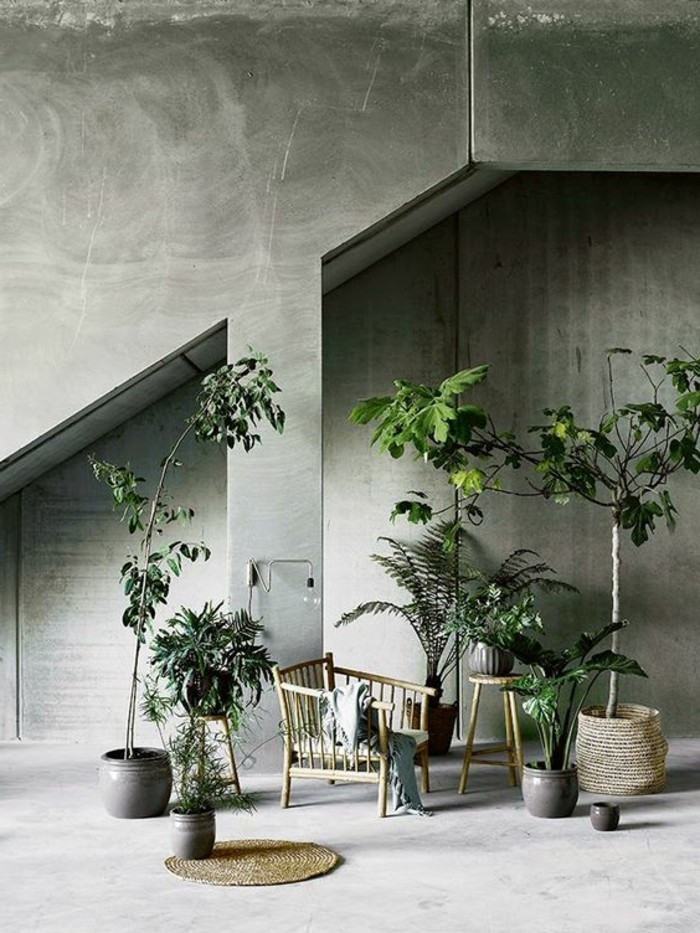 interieur-chic-dans-le-salon-plantes-vertes-d-interieur-béton-décoratif-pour-le-salon