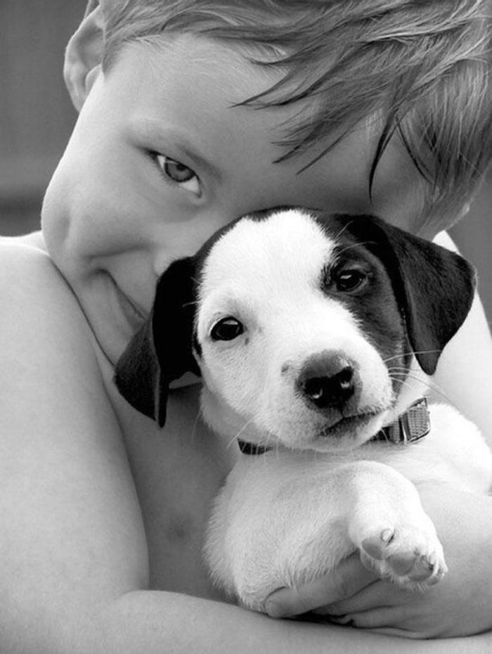 jack-russell-chien-noir-et-blanc