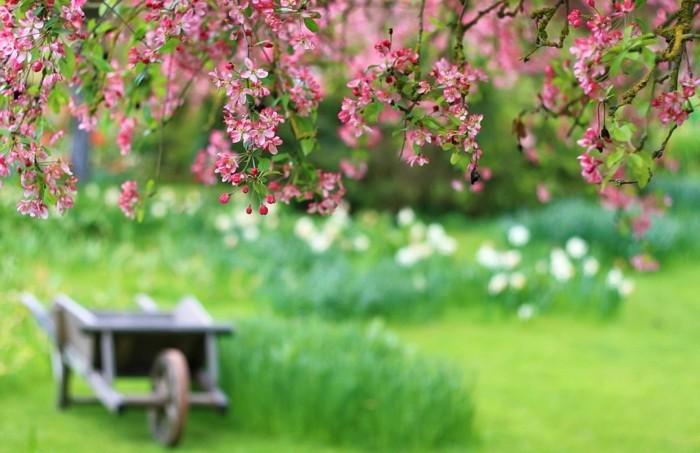 joie-de-la-nature-beauté-en-image-belles-images-nature-épreuve-magnifique