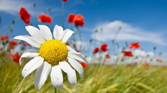 jolie-image-paysage-belles-images-nature-épreuve-magnifique