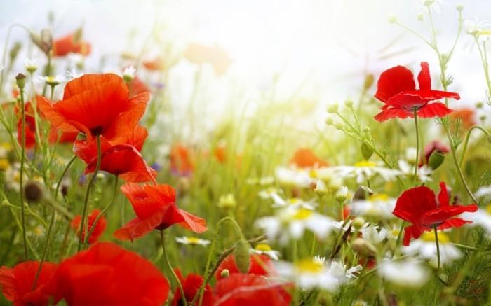 Le plus beau paysage fleuri! Voyez les meilleures images ...