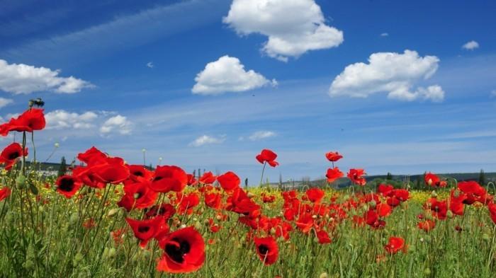 jolie-paysage-belles-images-nature-épreuve-magnifique-vert-bleu-rouge