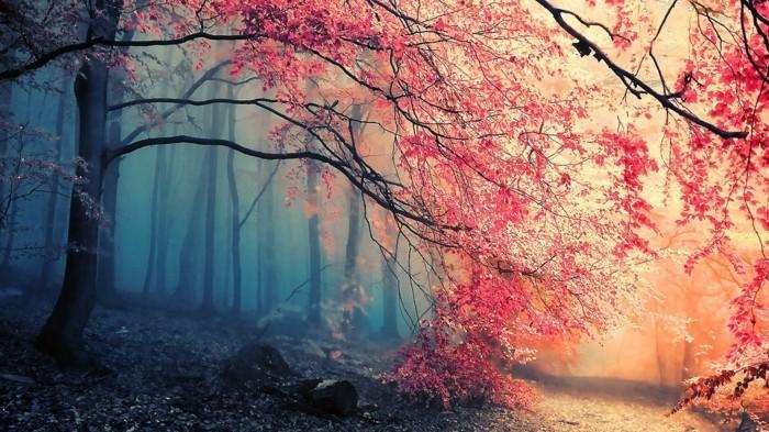 la-beauté-du-printemps-nature-et-decouverte-france-environnement-fête-de-la-nature