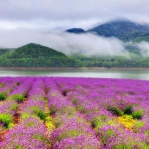 Le plus beau paysage fleuri! Voyez les meilleures images de la nature