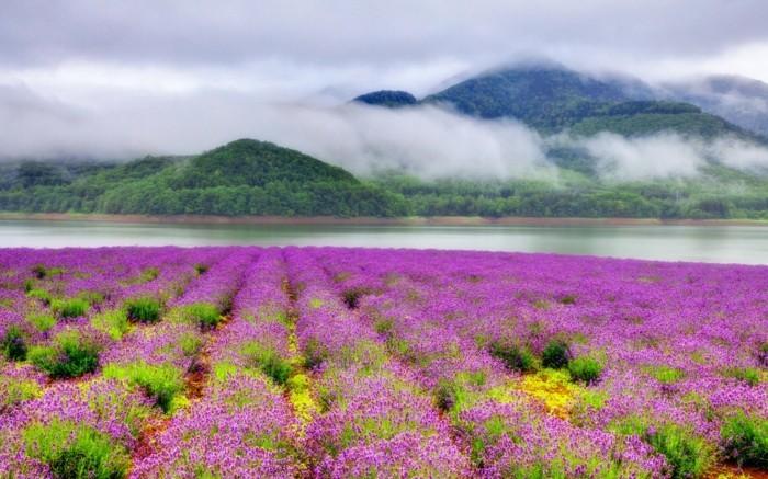 Le Plus Beau Paysage Fleuri Voyez Les Meilleures Images De La