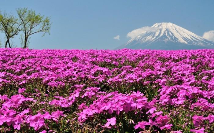 magnifique-photo-de-beau-paysage-bouquet-aquarelle-cool-image-a-la-montagne