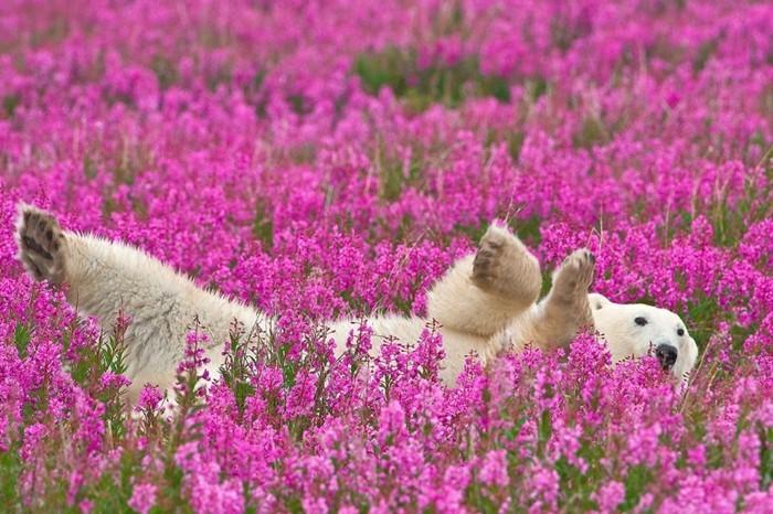 magnifique-photo-de-beau-paysage-bouquet-aquarelle-cool-image-beau-ourson
