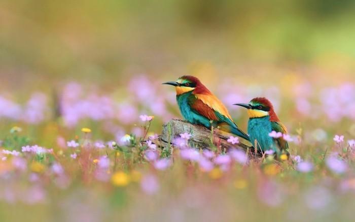 magnifique-photo-de-beau-paysage-bouquet-aquarelle-cool-image-oiseaux-beauté
