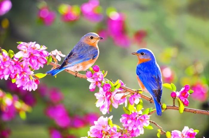 magnifique-photo-de-beau-paysage-bouquet-aquarelle-cool-image-oiseaux