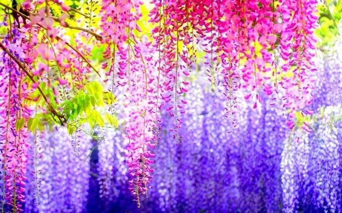 merveilleuse-image-soleil-levan-nature-belle-idée-de-photo-incroyable-violet-rose-bleu